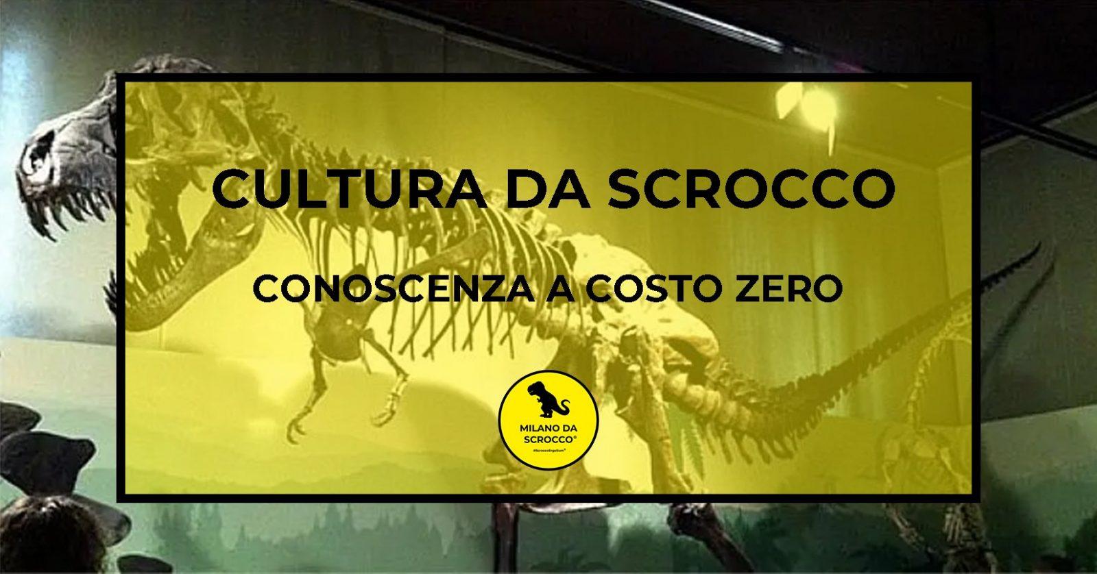 Read more about the article Cultura da Scrocco: conoscenza a costo zero